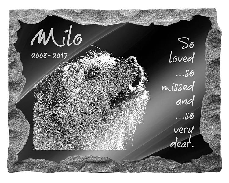Border Terrier Dog Memorial. Image and inscription etched on polished black granite with a natural outer edge chisel finish. Plaque size: 20