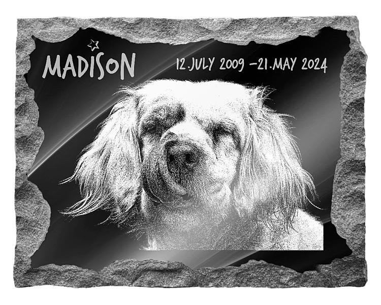 Clumber Spaniel Dog Memorial. Image and inscription etched on polished black granite with a natural outer edge chisel finish. Plaque size: 20