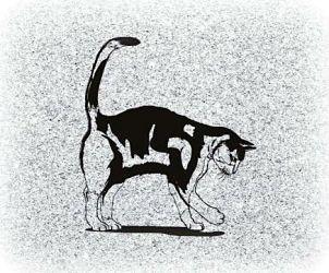 Cat Pet Memorial Image