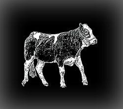 Cow Pet Memorial Image
