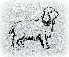 Pet Memorial for a Dog