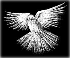 Dove Etched on Stone