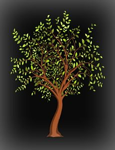 Picture of a tree for a Headstone