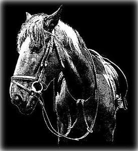 Horses Head Memorial Image