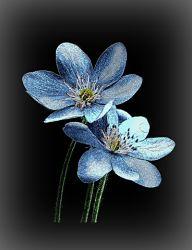 Exotic Flowers Memorial Image
